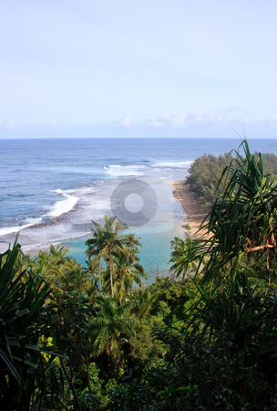 Ke'e beach with green trees and palms in foreground stock photo, Ke'e beach surrounded by green trees, ferns and palm trees by Steven Heap