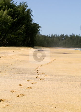 Footsteps receding into the distance stock photo, Footsteps on the pristine beach of Lumahai on the island of Kauai by Steven Heap