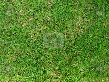 Green Grass stock photo,  by Kirsty Pargeter