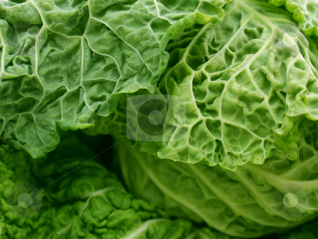 Savoy cabbage stock photo, Close up shot of a savoy cabbage by Kirsty Pargeter