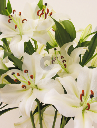 Spring Lillies stock photo,  by Kirsty Pargeter
