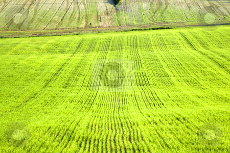 Grass stock photo,  by Fabio Alcini