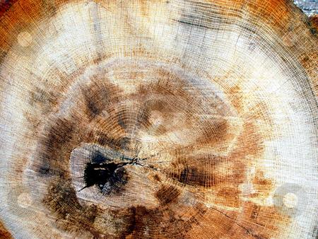 Woodgrain stock photo, Texture of fibers in wood by Jack Schiffer