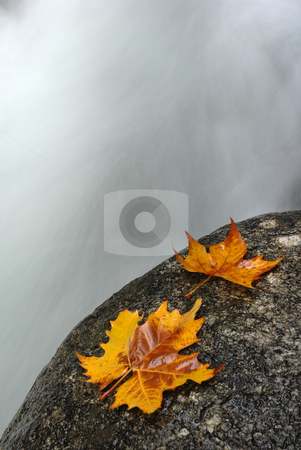 Leaves stock photo, Autumn leaf in the edge of the river by Rui Vale de Sousa