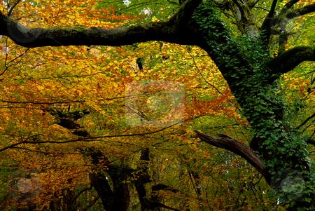 Autumn stock photo, Autumn at the forest, portuguese national park by Rui Vale de Sousa