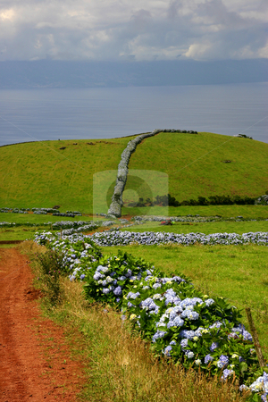 Azores stock photo, Azores road at the coast in s miguel island by Rui Vale de Sousa