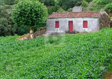 House stock photo, Azores farm house by Rui Vale de Sousa