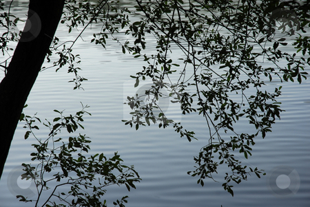 Branches stock photo, Tree branches detail at the water lake by Rui Vale de Sousa