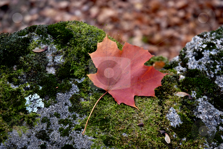 Autumn stock photo, Colored leaf in the ground at autumn by Rui Vale de Sousa