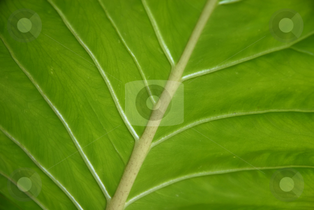 Lines stock photo, Leaf detail by Rui Vale de Sousa