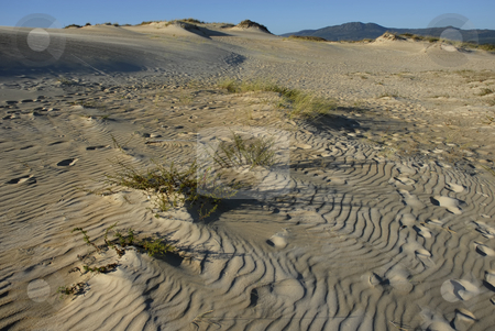 Desert stock photo, Detail of the north of spain desert by Rui Vale de Sousa