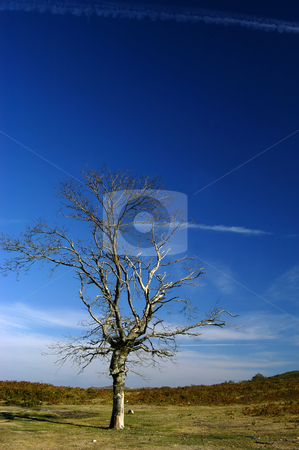 Alone stock photo, Tree in the mountain by Rui Vale de Sousa
