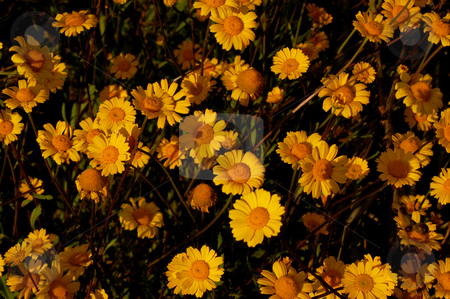 Yellow stock photo, Yellow flowers by Rui Vale de Sousa