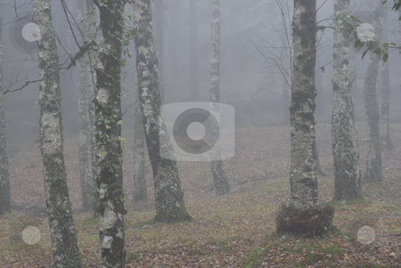 Fog stock photo, Forest fog in the portuguse national park by Rui Vale de Sousa