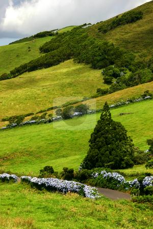 Vegetation stock photo, Vegetation of azores islands by Rui Vale de Sousa