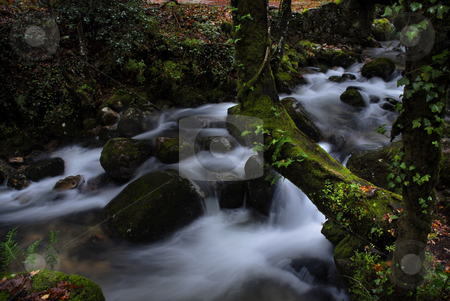 River stock photo, Milky river in the forest with green moss by Rui Vale de Sousa