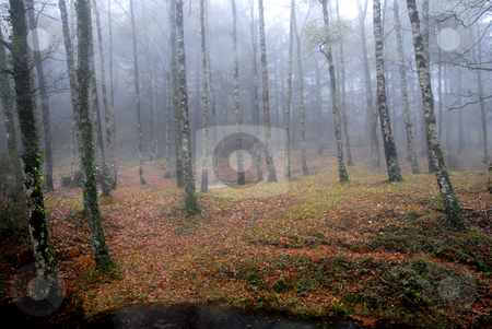 Forest stock photo, Forest fog in the portuguese national park by Rui Vale de Sousa