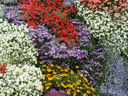 Flowers stock photo, Garden of flowers by Rui Vale de Sousa