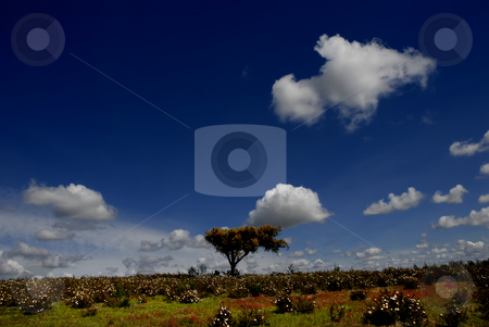 Spring stock photo, Spring time in alentejo, the south of portugal by Rui Vale de Sousa