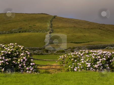 Fence stock photo, Azores rural view at sao miguel island by Rui Vale de Sousa