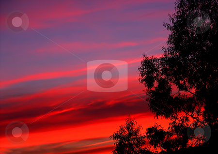 Sunset stock photo, Sunset at the forest by Rui Vale de Sousa