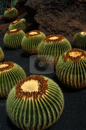 Cactus stock photo, Cactus detail by Rui Vale de Sousa
