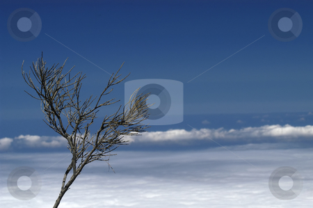 Clouds stock photo, Plant at the mountain with the clouds under by Rui Vale de Sousa