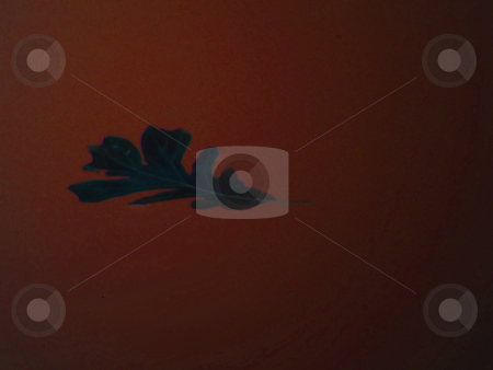 Autumn Has Arrived  stock photo, Autumn Has Arrived (digital art). one single fall leaf silhouette against autumn dark burnt orange/red color background. by Dazz Lee Photography