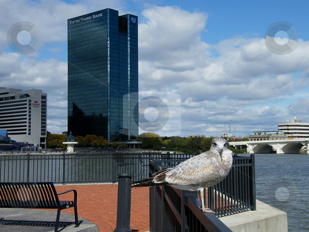 Seagull Downtown Toledo Ohio stock photo, Seagull Downtown Toledo Ohio. Seagull Perched on the railing  in Toledo Ohio. by Dazz Lee Photography