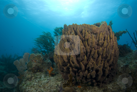 Brown Sponge Landscape stock photo, A brown coral head with fish swimming about under the sun glowed surface of the bahamian sea. by A Cotton Photo