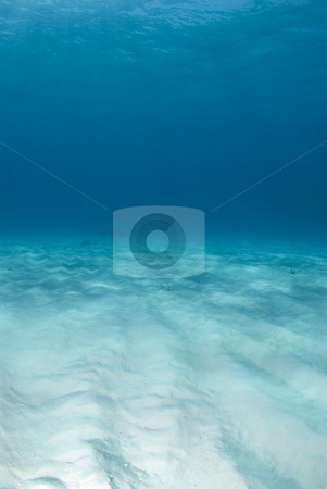 Tiger Beach Portrait Seascape stock photo, Background image of the bright white rippled sand on the ocean floor at Tiger Beach in the Bahamas by A Cotton Photo