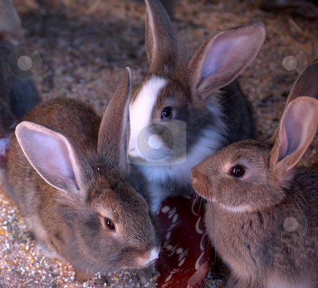 Rabbit stock photo, Rabbits in there house by Rui Vale de Sousa