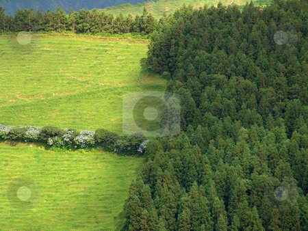 Green stock photo, Azores forest and fields by Rui Vale de Sousa