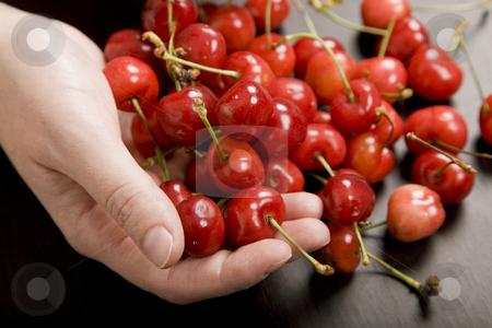 Cherries stock photo, Many cherries in a woman hand at a table by Rui Vale de Sousa