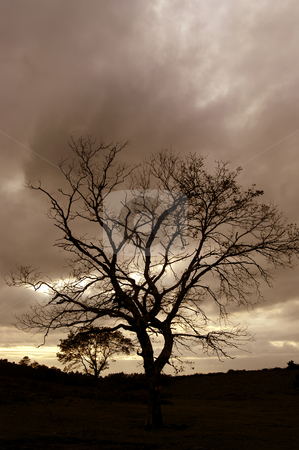 Sunset stock photo, Tree at the sunset by Rui Vale de Sousa