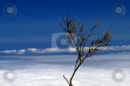 Bush stock photo, Bush and the smog by Rui Vale de Sousa