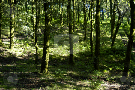 Forest stock photo, Forest detail by Rui Vale de Sousa