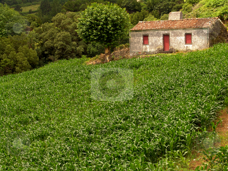 House stock photo, Farm house with a field of corn in azores by Rui Vale de Sousa
