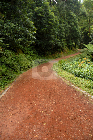 Road stock photo, Red road in azores island of s miguel by Rui Vale de Sousa