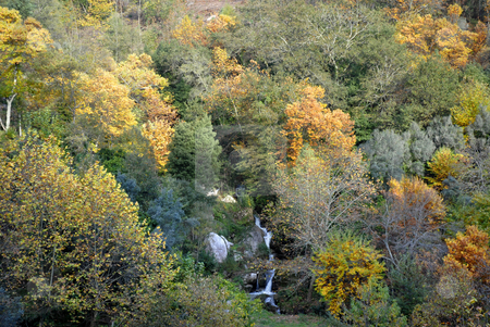 Autumn stock photo, Small river in the portuguese national park, at autumn by Rui Vale de Sousa