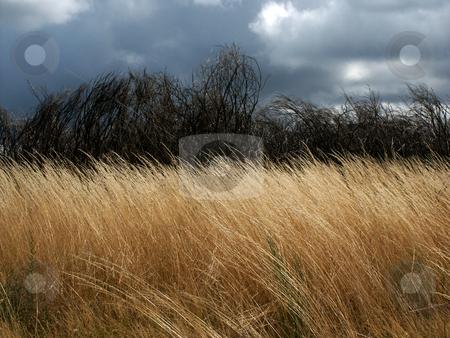 Vegetation stock photo, Field vegetation by Rui Vale de Sousa