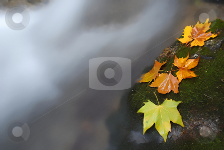 Autumn stock photo, Autumn leaves in the edge of the river by Rui Vale de Sousa