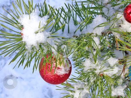 Christmas tree under snow stock photo, Red decoration ball on the christmas tree outdoor by Sergej Razvodovskij