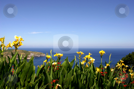 Flowers stock photo, Flowers at the coast by Rui Vale de Sousa