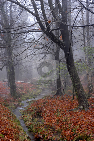 Fairytale stock photo, Smog at the forest trees in autumn by Rui Vale de Sousa