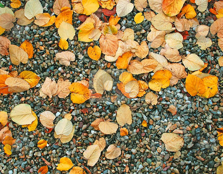 Autumn wet leaves background over rocks stock photo, Yellow and red wet autumn leaves over rocks by Julija Sapic