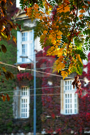 Autumn urban view stock photo, Autumn leaves over red ivy building in Belgrade by Julija Sapic