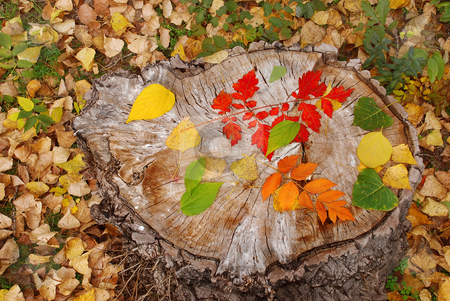 Autumn leaves stock photo, Autumn leaves on dry stump natural background by Julija Sapic