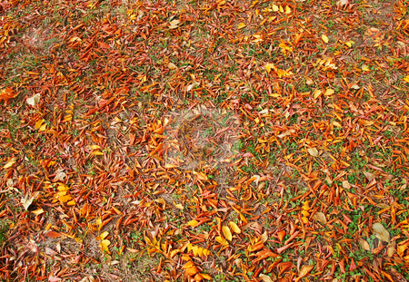 Autumn leaves stock photo, Autumn red and yellow leaves outdoor on earth by Julija Sapic