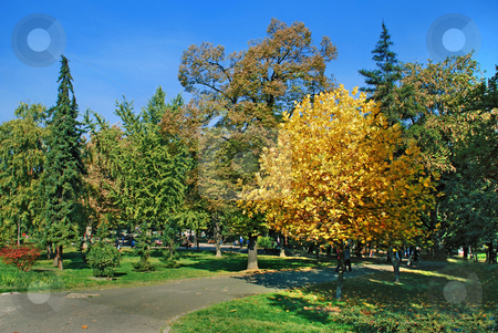 Autumn park landscape stock photo, Yellow and green trees in par over blue sky by Julija Sapic